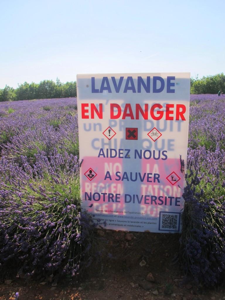 Lavende en danger