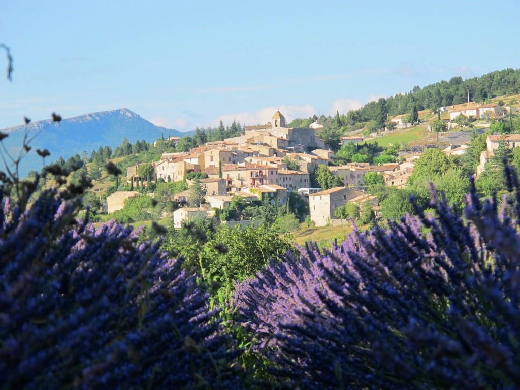 lavender & village